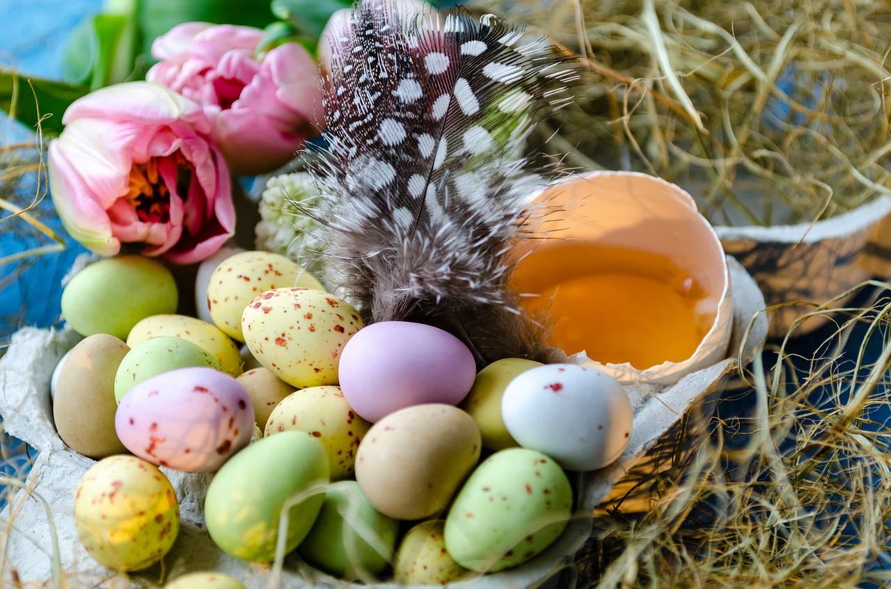 lay eggs